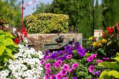 Flower power - Photo of Morières-lès-Avignon
