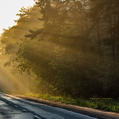 """""""The Road To The Cemetery"""", or """"Early Morning Road In The Forest"""" - choose your mood"""