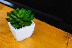Small plant at the edge of wooden table