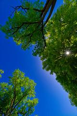 Le soleil a travers les arbres
