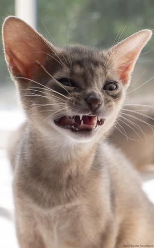 Yawn 2