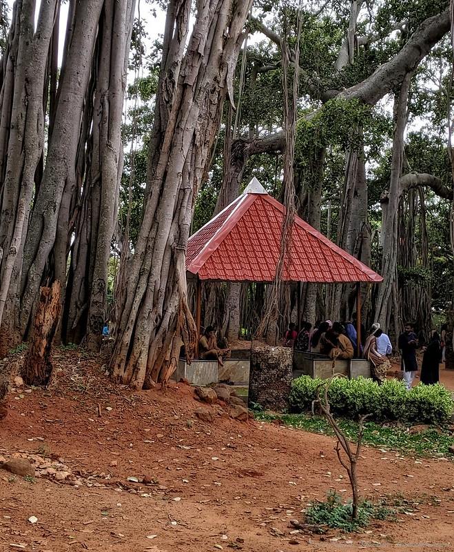 Giant Banyan tree, Bangalore, India