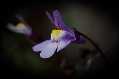 Tiny wild - Photo of Mulcent