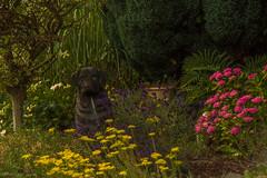 Gartenbilder (Juli 2019)
