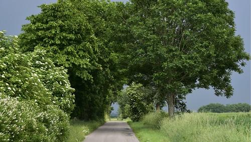 Auf der Straße über die Sieben Berge; Norderstapel, Stapelholm (12)