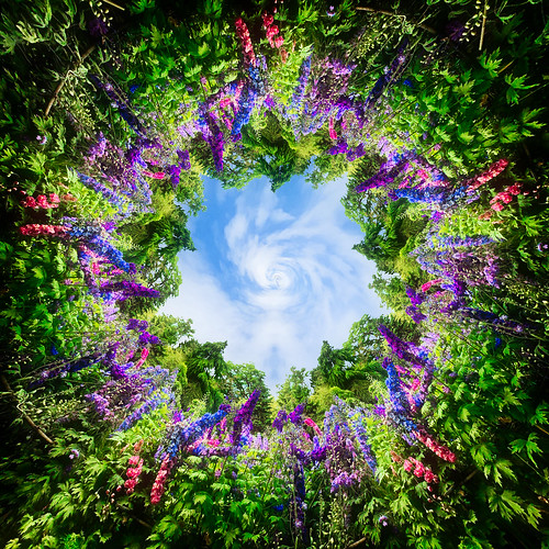 Delphinium Forest