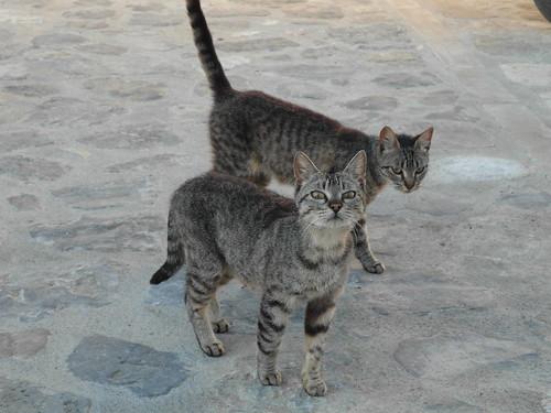 Cats from Sos del Rey