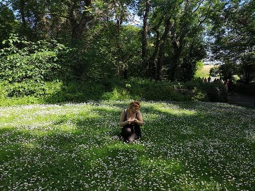 The Daisy Field.