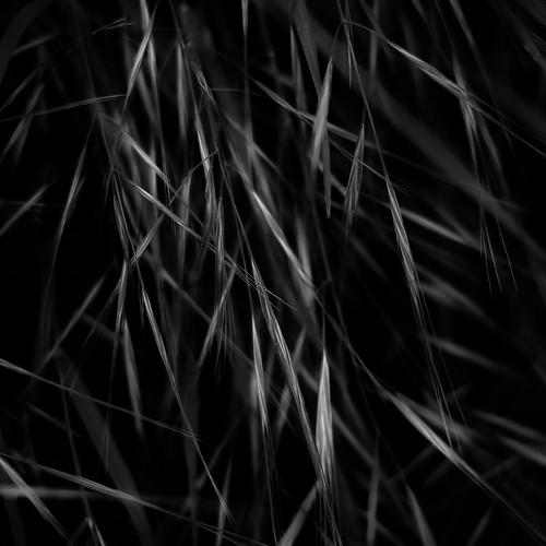 Forest Grass 028