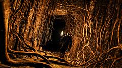 The Witcher 3: Wild Hunt / Underground