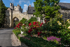 _DSF5463 - Montreuil Bellay. - Photo of Cizay-la-Madeleine