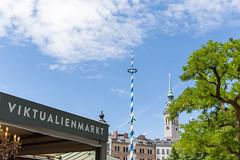 Geschmückter Maibaum-Mast am Viktualienmarkt in München, mit der Peterskirche im Hintergrund
