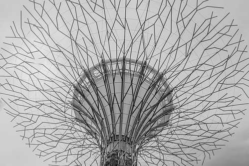 A supertree canopy in black and white