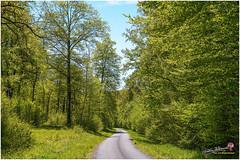Printemps en forêt Châtillonnaise