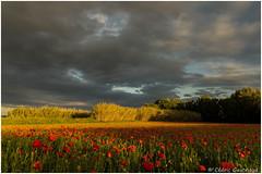 avant l'orage.. - Photo of Lédenon