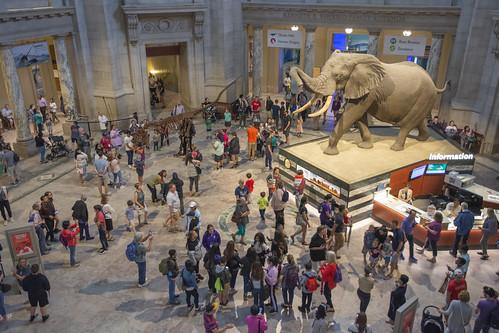 Elephant in the rotunda!
