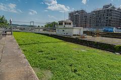 28-Plantes aquatiques à l'écluse - Photo of Bouliac