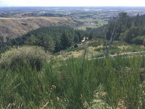 Photopoint-Harry Ell track cabbage tree corner-northwest