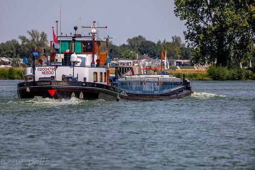 Maas Maasbommel