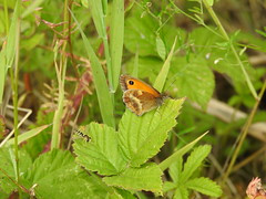 Small Heath DSCN1925