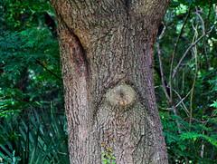 Mr. Grumpy Tree