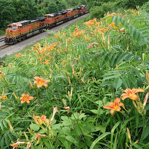 Orange Petals & Orange Pullers