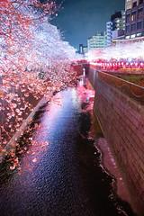Hanami at Megurogawa River 2019