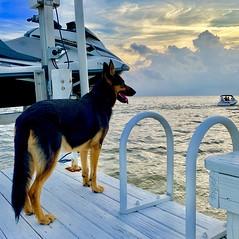 Sea/Watch/Dog - IMRAN™