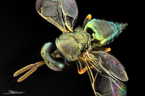 colores mágicos de un insecto mágico  [Explore #21 2019-07-09]