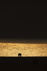 Elephant on the bank of Golden River