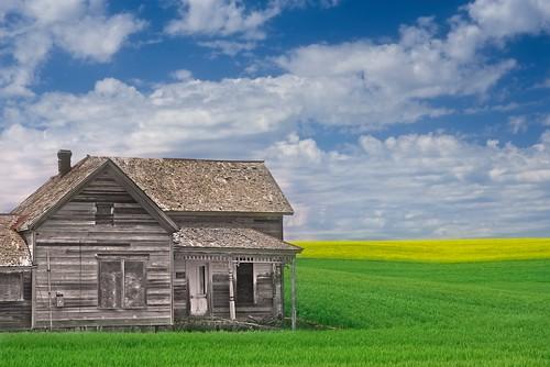 Abandoned Farmhouse Canola Field 5955 A