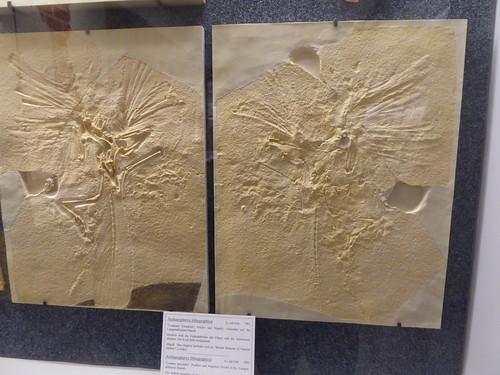 Fossilien u Steindruck Museum, Guzenhausen
