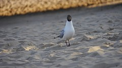 A bird on a beach