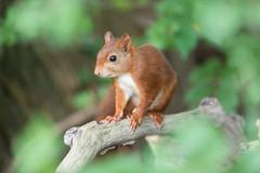 Eye in eye with a squirrel