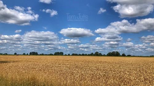 Graanvelden langs de IJssel, Baak, Netherlands - 2757