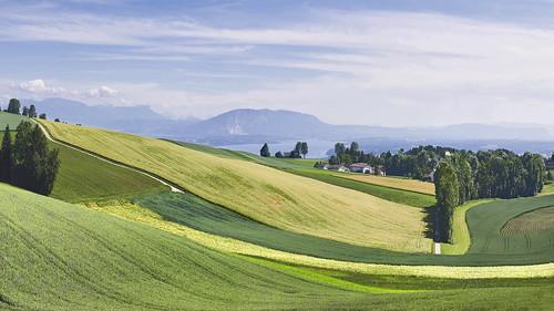 Fields at Burtigny