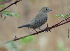 Pássaros-Birds 2