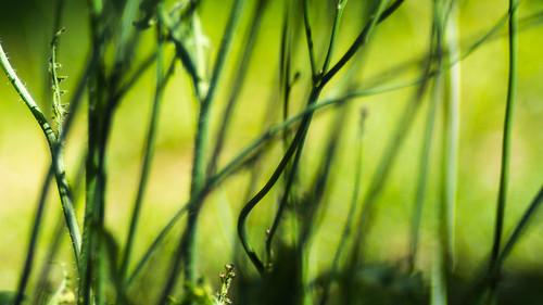 herbs (macro)