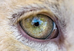 Photo exhibition 2/6: the eye of a white lion cub