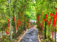 Bamboo forest, Mangshan national park 莽山国家森林公园、湖南