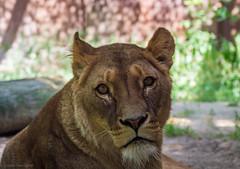 Gaia Zoo (Juli 2019)