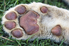 Photo exhibition 6/6: the paw of a domestic