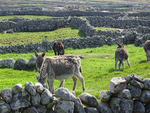 Deserted Village of Clough Na Mara