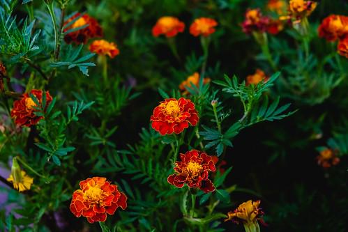 Vibrant orange flowers in a small garden