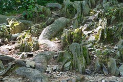Roots and Stones