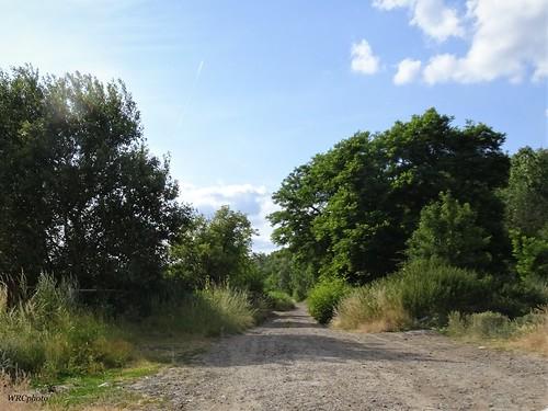 Rue de l'arbre tout seul.