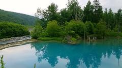 Aoike (blue pond ) pond Biei, Furano Japan
