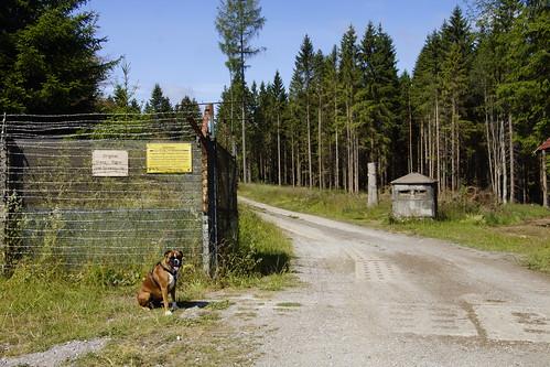 Boxer Lotje voor de oude grensgebied voormalige DDR in Sorge 10-07-2019