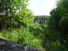 Fampoux, site naturel du marais des crêtes d'Athies (4)