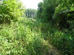 Fampoux, site naturel du marais des crêtes d'Athies (3)